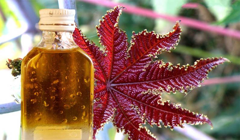 Использование касторового масла в домашней косметологии…